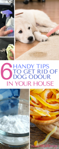 Do you love your fur babies but don't want your home to smell like a dog kennel? Here are 6 tips to get rid of dog odour in your house. #pets #dogs #cleanhouse